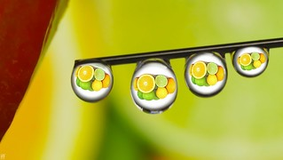 #Citrus - macro Mondays