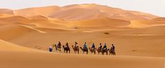 Towards the sand dunes (Nicolas Bussieres (Lost Geckos)) Tags: desert sahara morocco dunes camel