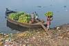 Carrying banana! (ashik mahmud 1847) Tags: bangladesh d5100 nikkor people working banana shadarghat dhaka
