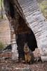 Swamp Wallaby (ʘwl) Tags: panasonic gx8 100400mm leica dg vario wildlife animal australia mammal canberra act swamp wallaby shelter tree hide old growth
