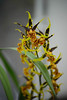 AOS 1.2018-7 (Jordan Cataldo) Tags: aos american orchid society st paul mn winter carnival