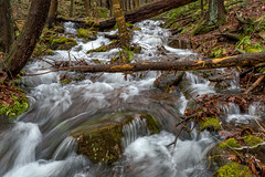 Long Exposure Fun (outdoor_dave) Tags: forest longexposure motionblur water stream pennsylvania outdoor outofnature nature