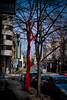 it's cold outside... (3OPAHA) Tags: tree street belgrade serbia red sony