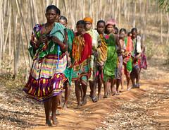 Dans la forêt d'eucalyptus (Christian Mathis) Tags: femmes foret marche couleur file