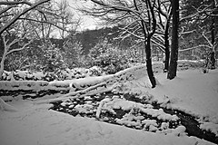 ogden river (mkcazackm) Tags: wind windy storm day ogden beast from east snow snowing harsh weather uk russia colder ice breeze nature red robin white black trees