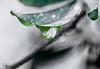 Drops!!! (Charo R.) Tags: gotas drops lluvia macrofotografía canon hojas ramas