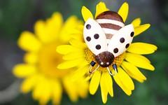 Die Geschichte der Bienen (G_E_R_D) Tags: macromondays myfavouritenovelfiction diegeschichtederbienen thehistoryofthebees majalunde roman novel buch book