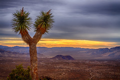 Joshua Tree National Park (aaron_j_o) Tags: joshuatreenationalpark hdr sky nature clouds colour colors contrast hill rocks plants peace outdoors inspiration mountain blue otherkeywords orange yellow green road purple desert storm