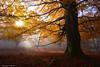 Autumnal Glow (Hector Prada) Tags: otoño bosque árbol niebla luz sol bruma hojas atmósfera autumn forest tree fog mist sun mood fall leaves nature naturaleza magic morning color backlight contraluz paísvasco basquecountry