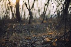 golden morning (Joshi Anand) Tags: anandjoshi anand joshi india pune morningwalk casual sunrise dof bokeh niftyfifty