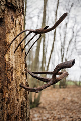 Forks. ( Explore ) (Jez22) Tags: forks tree dullywood gardening tool rusty fork old equipment retro rustic brown rural rust metal objects woodland copyright jeremysage england kent explore