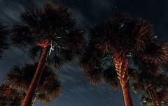 palms (skye-skye) Tags: georgia beach tree trees palm palmtrees coast coastal coastline stsimons island stsimonsisland stsimonsislandgeorgia coastalgeorgia longexposure night nighttime