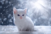 'Snow Globe' (Jonathan Casey) Tags: kitten white snow nikon d810 50mm f14 sigma art