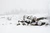 32/50 project 50 mm (Thea Teijgeler) Tags: sauerland sneeuw walk wandeling landschap