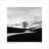 slope (ekkiPics) Tags: baum schwarzwald strase winter