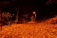 Ramlösa parken löv (anderssonjakob684) Tags: ramlösapark helsingborg löv dark magic light