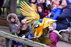 Blue-and-Gold Macaw (Bri_J) Tags: tropicalbutterflyhouse northanston southyorkshire uk butterflyhouse yorkshire nikon d7200 zoo blueandgoldmacaw macaw parrot bird landing wings araararauna