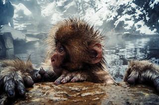 Monkey Profile