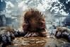 Monkey Profile (moaan) Tags: yamanouchi nagano japan monkey snowmonkey babysnowmonkey japanesemacaque bathingmonkey jigokudani jigokudanispa jigokudanisnowmonkeypark animal domesticanimal ricohgxr gxrmounta12 superangulon21mmf34 leicasuperangulon21mmf34 utata 2018