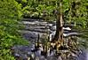 Rapids, Hillsborough River State Park, Florida (klauslang99) Tags: klauslang nature naturalworld northamerica florida hillsborough river water rapids trees cypress