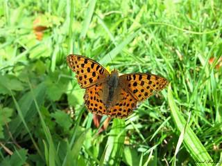Butterfly 1557