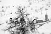PIO_0611m (MILESI FEDERICO) Tags: milesi milesifederico montagna montagne mountain italia italy iamnikon inmontagna inverno ice wild winter piemonte piedmont visitpiedmont valsusa valliolimpiche valdisusa valledisusa sauzedicesana cittàmetropolitanaditorino freddo nikon nikond7100 nital natura nature nat neve nevicata snow 2018 gennaio alpi alpicozie altavallesusa altavaldisusa d7100 dettagli details paesaggio panorama landscape bianconero bw biancoenero blackandwhite blackwhite monocromatico desaturazione chiesa wildlife vita life animal animale birds uccelli alberi albero ngc ngg europa europe explorer