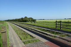 Cambridge Guided Busway (2) (rh1192) Tags: cambridge guided busway cambridgeshire bus cycle cycling cyclepath england gbw