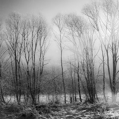 frigid morning (G. For._I'll be back ;)) Tags: trees group outdoor cold snow frost winter mist light bw