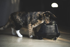 Cat and Mouse Droid (3rd-Rate Photography) Tags: kitten cat starwars mousedroid mse6 remotecontrol disney disneyparks toy toyphotography canon 50mm 5dmarkiii jacksonvile florida 3rdratephotography earlware 365