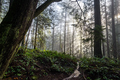 Mt. Seymore Hike-3 (hotcommodity) Tags: hiking outside outdoors adventure winter mountain forest pacific northwest nature landscape trees sunbeams sunshine volumetric light fog moss green ferns highlight beautiful bc mtseymour canada vancouver