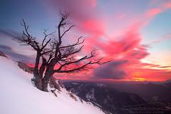 SASIA SUTAN (Obikani) Tags: sasiasutan amanecer sunrise mountain tree clouds colorful color snow winter cold warm amazing zuhaitza egunsentia nafarroa navarra aralar
