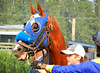 Horse in Blue (knightbefore_99) Tags: hastings racecourse horse head blue beaty fast bet summer eastvan vancouver bc track cool awesome best eye wonderful