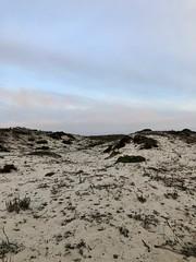 Sand Dunes at at Asilomar Beach (skylarprimm) Tags: ✓ asilomar beach california monterey nature pacific pacificocean sand