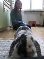 IMG_4197 (grindove) Tags: djur kanin edvin
