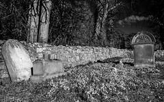 Graveyard snowdrops (Tom McPherson) Tags: mono blackwhite xt2 f56 iso400 23mm fujifilm grass snowdrops explore church gothic death gravestone graveyard grave cemetery
