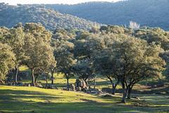 Sierra de Andujar - Andalusia - Spain (wietsej) Tags: sierra de andujar andalusia spain rx10 iv rx10m4 sony landscape nature light trees mountain rx10iv