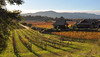 Napa Valley view (Jason's Travel Photography) Tags: wine napa vineyard sunset grapes napavalley winecountry ca california napacounty winter december 2017