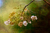 Hydrangea (Thilo Sengupta) Tags: natur nature autumn picoftheday nice nicepic