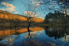 Thirlmere Reflections (Andy Watson1) Tags: thirlmere reflection reflections autumn lake district national park lakedistrict lakedistrictnationalpark cumbria england uk united kingdom great britain light shadow trees mountains landscape view scenery scenic travel trip november canon 70d sigma countryside photography