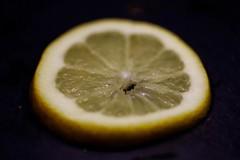 Lemon slice (DocJezza) Tags: citrus macro mondays macromondays