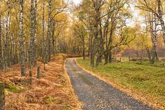 Autumn Road Glen Feshie (Geoff France) Tags: landscape scottish glen cairngorms cairngormsnationalpark autumn trees road ferns bracken