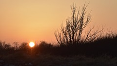 Sonnenuntergang bei Booknis; Waabs, Schwansen (10) (Chironius) Tags: waabs schleswigholstein deutschland germany allemagne alemania germania германия szlezwigholsztyn niemcy schwansen sonnenuntergang sunset atardecer tramonto zonsondergang закат dämmerung dusk schemering crépuscule crepuscolo abend evening abends gegenlicht himmel sky ciel cielo hemel небо gökyüzü