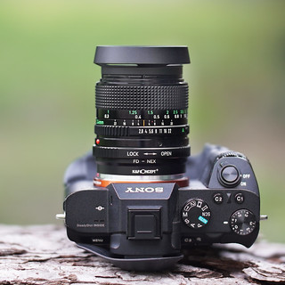 Canon nFD 24mm ƒ/2.8 on SONY ⍺7II