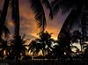 Resort Sunset (peterphotographic) Tags: p8150838edwm resortsunset olympus em5mk2 microfourthirds ©peterhall varadero cuba cuban caribbean sunset dusk beach seaside holiday tree palm shadow sky