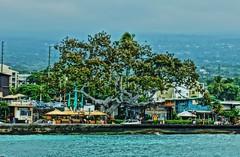 The Tree (chumlee10) Tags: tree hawaii kona southpacific pacific ocean cruise2017 emeraldprincess