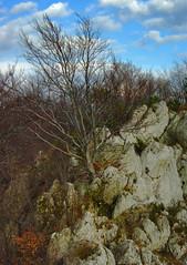302 I grow on a rocky ground (Hejma (+/- 5400 faves and 1,7 milion views)) Tags: skały wapienne drzewa krzewy las bukowy liście