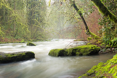 Lacamas Creek (rowjimmy76) Tags: swwashington pnw pacificnorthwest hiking scenery nature landscape outdoors creek river canon sl1 camas moss green trees forest mist longexposure blurredwater rocks scenic