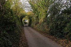Haldon Belvedere and Shillingford St George - Nov 2017