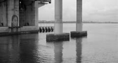 Lady of Lake Worth (PositiveAboutNegatives) Tags: leica slr leicaflexsl leitz 50mmsummicron film analog foma fomapan fomapan100 bw blackandwhitefilm rodinal coolscan mural lakeworth florida