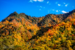 Chimney Tops Memory (Tony Phillips Photography) Tags: chimneytops greatsmokymountainsnationalpark tennessee autumn autumncolor bluesky fall fallcolor landscape landscapephotography mountainview mountains nature naturephotography nikon nikonphotography outdoorphotography outdoors scenery secenicview